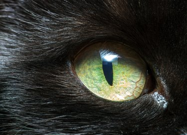 Black cat green eye closeup