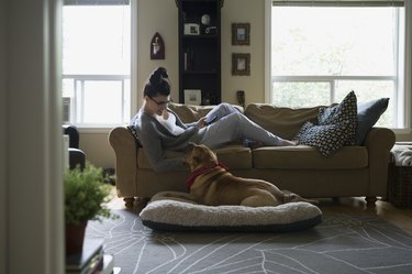 Woman sofa with cell phone looking down dog