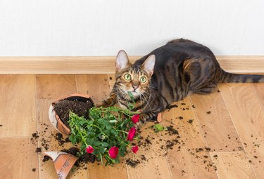 cat with broken flower pot on floor