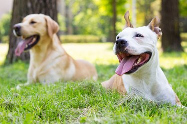Happy dog friends