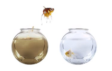 Fish jumping from his polluted bowl into a clean fishbowl