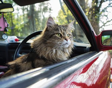 Close-Up Of Cat Sitting In Car