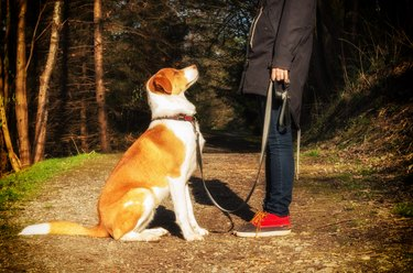 obedient dog sitting at owner's feet in forest