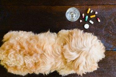 veterinary medicine, pet, animals, health care concept - focus on dog