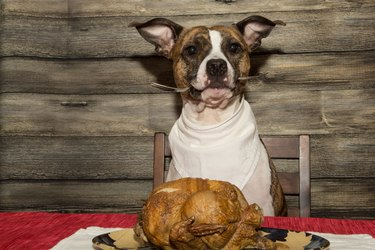dog with turkey at table