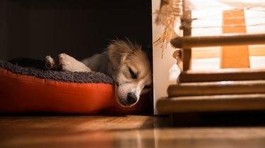 Dog sleeping in dog bed next to window