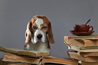 very smart dog
