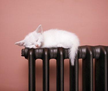 White kitten sleeps balanced on a radiator