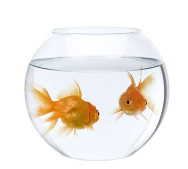 Two goldfish in fish bowl
