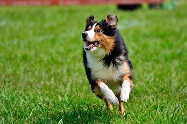 Happy dog, running and having fun