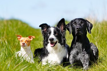 two big dogs and one little dog in a field