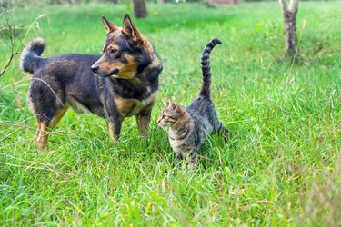 Dog and cat best friends walking together outdoor on the grass