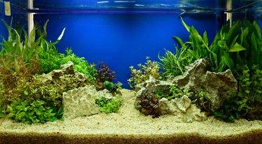 Aquascaping of the planted aquarium