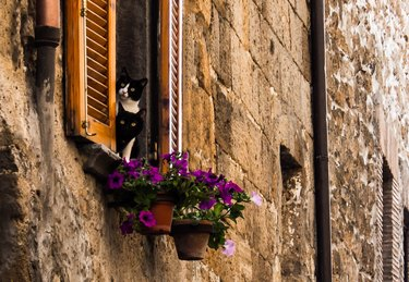 Low Angle View Of Cats By Flowers On Window