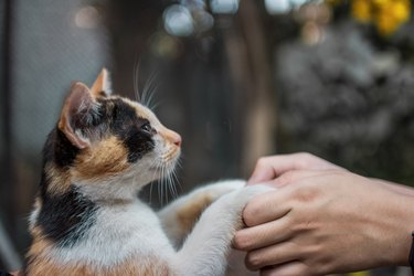 Close-Up Of Human Hands Holding Cat Paw