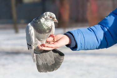 the pigeon sits on a hand of the person