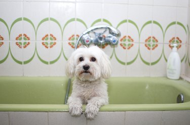 Dog in the bathtub