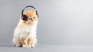Cat Siting on Floor Listening music with Headphones And Copy space at right of farme.