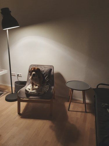 Dog sitting in chair underneath floor lamp.