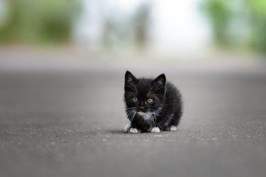 black kitten posing on the road