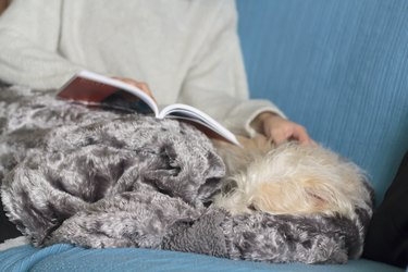 Woman on sofa covered with blanket reading a book and petting her dog