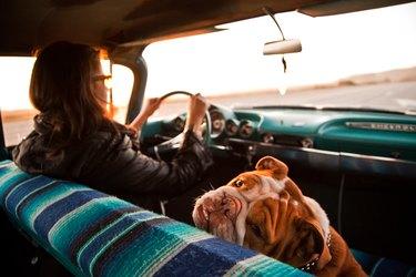 Woman and English bulldog inside Chevrolet bel air, Santa Cruz, California, USA