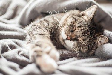 A cat sleeping in a blanket.