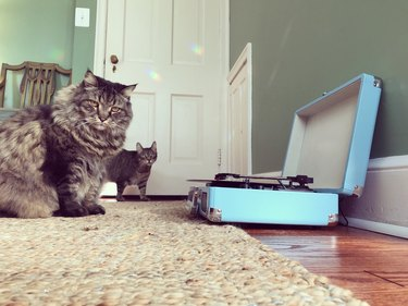 Two Curious Cats and Record Player