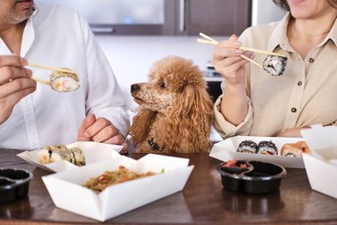 Couple enjoy japanese sushi meal at home while their dog watches