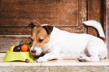 Dog with bowl full of fruits and nuts licking mouth