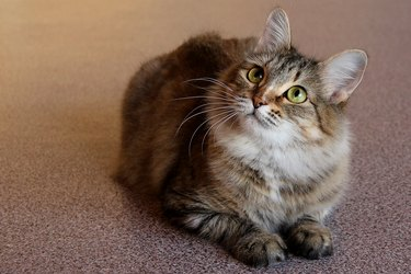 Portrait of one cute cat sitting on the floor