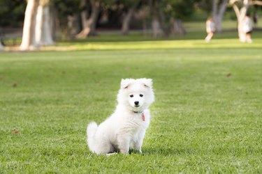 Cute puppy looking at camera