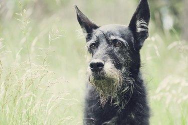 An old dog