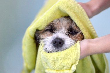dog being towel dried after a bath