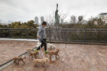 person walking many dogs