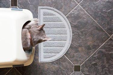 A cat using a litterbox