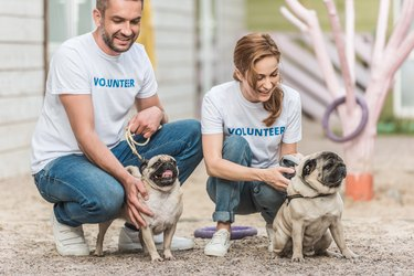 two volunteers of animals shelter palming pug dogs