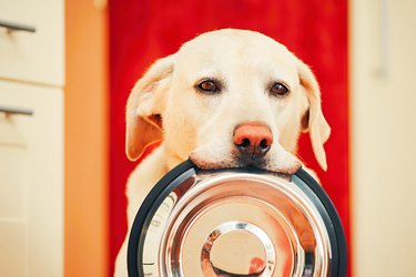 dog waiting for food with his bowl in his mouth