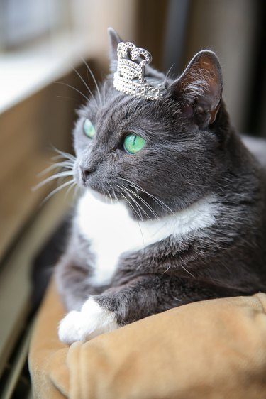 Spoiled Cat Wearing Crown