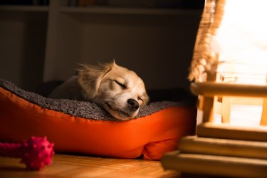 Dog sleeping in his bed next to window