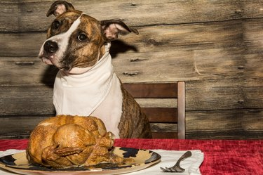 Begging for the Holiday Feast