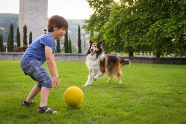 Young boy playing with a dog in the park