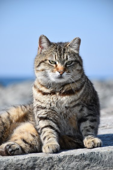 poor cat portrait