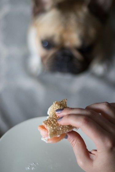 dog eyeing lox bagel