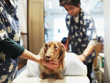 Japanese Dogs Treated By Owners