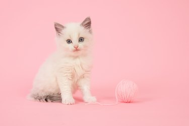 Baby cat with blue eyes in pink colors