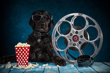 Black funny dog with retro film production accessories