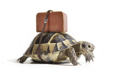 Turtle with suitcase.