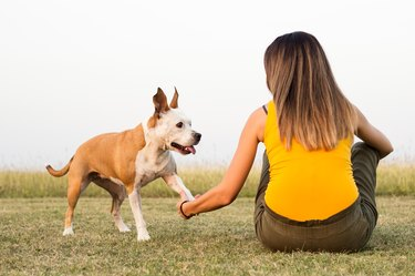 Woman with her dog sitting on the grass and exchanges tenderness