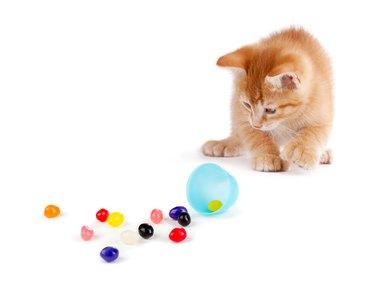 Cute Orange Kitten spilling jelly beans on White